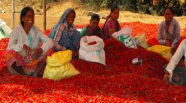 Výlet na venkov aneb chilli, kam se podíváš